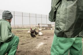 Two men in green overalls in a prison yard, overseeing some chickens as part of a chicken project on the Kainos Challenge to Change programme